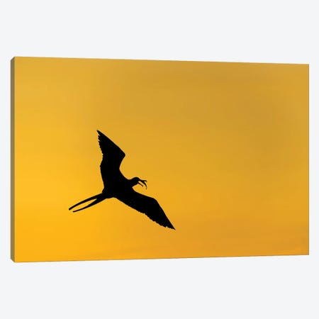 Frigatbird Sunset I Canvas Print #MTS43} by Martin Steenhaut Canvas Art Print