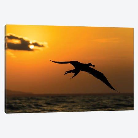 Frigatbird Sunset II Canvas Print #MTS44} by Martin Steenhaut Canvas Art