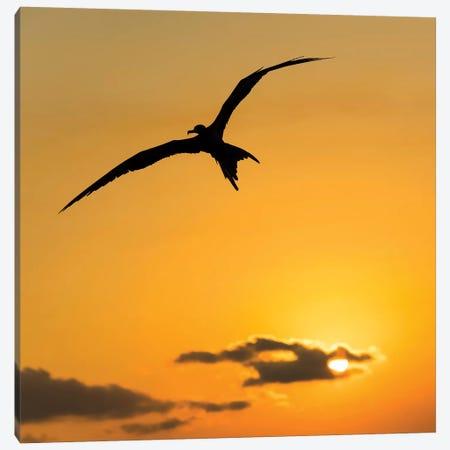 Frigatbird Sunset III Canvas Print #MTS45} by Martin Steenhaut Canvas Artwork