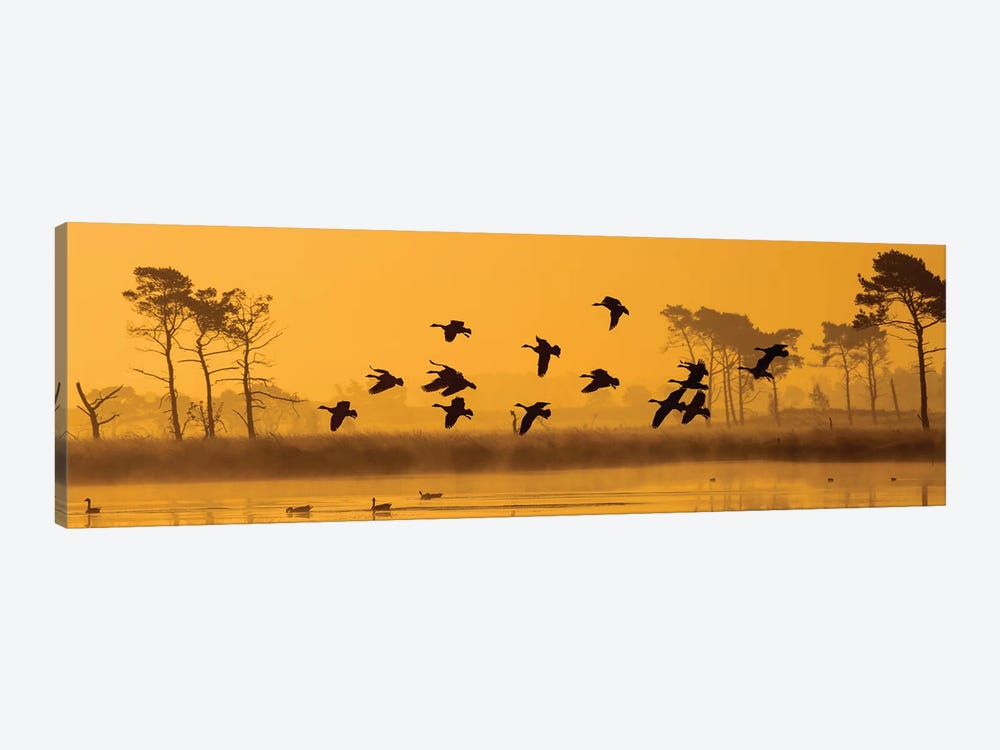 Geese Landing by Martin Steenhaut 1-piece Canvas Wall Art