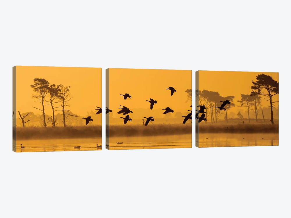 Geese Landing by Martin Steenhaut 3-piece Canvas Artwork