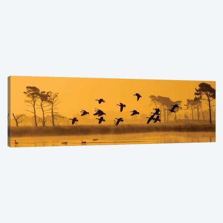 Geese Landing Canvas Print #MTS48} by Martin Steenhaut Canvas Art Print