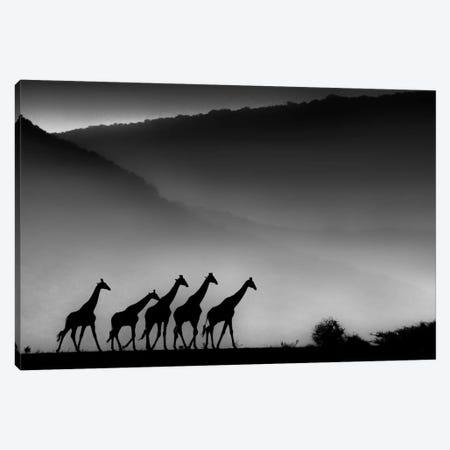 Giraffes Canvas Print #MTS51} by Martin Steenhaut Canvas Wall Art