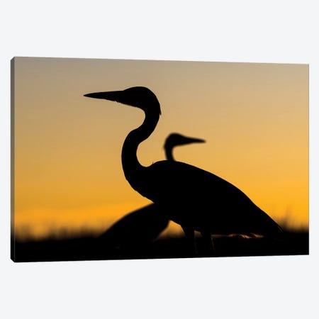 Heron Duet Canvas Print #MTS57} by Martin Steenhaut Canvas Art Print