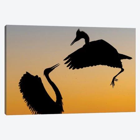 Heron Fight Canvas Print #MTS58} by Martin Steenhaut Canvas Wall Art