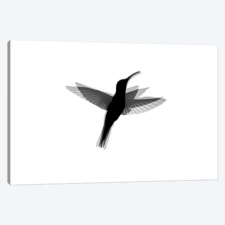 Hummingbird Silhouet Canvas Print #MTS62} by Martin Steenhaut Canvas Print