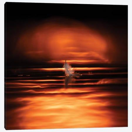 Last Feather Canvas Print #MTS70} by Martin Steenhaut Canvas Wall Art