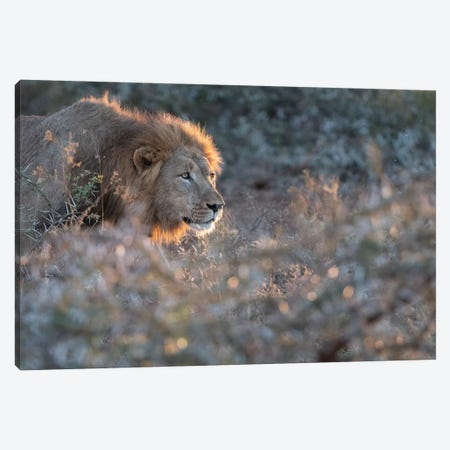 Lion Hunt Canvas Print #MTS73} by Martin Steenhaut Canvas Wall Art