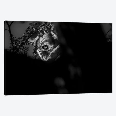 Lioness Look Canvas Print #MTS75} by Martin Steenhaut Canvas Art Print