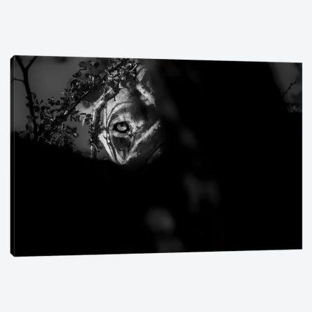 Lioness Look Canvas Print #MTS75} by Martin Steenhaut Canvas Art Print