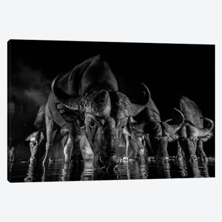 Night Buffalo I Canvas Print #MTS81} by Martin Steenhaut Canvas Print