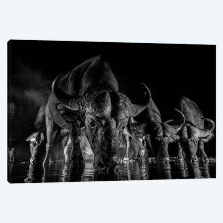 Night Buffalo I Canvas Print #MTS81} by Martin Steenhaut Canvas Print