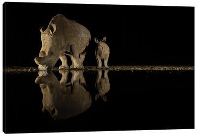 Night Rhino II Canvas Art Print