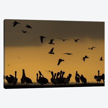 Pelican Pier Canvas Print #MTS86} by Martin Steenhaut Canvas Wall Art