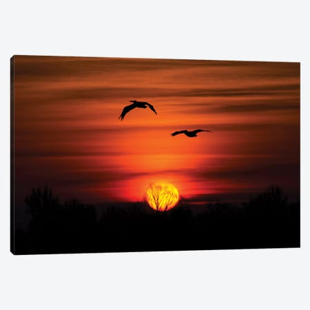 Pelican Sunset Flight Canvas Print #MTS87} by Martin Steenhaut Canvas Art