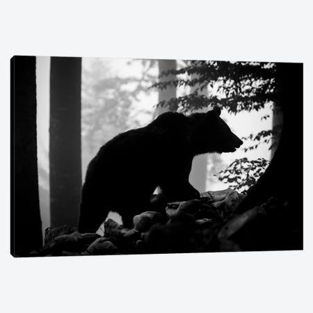 Bear Silhouette I Canvas Print #MTS8} by Martin Steenhaut Canvas Artwork