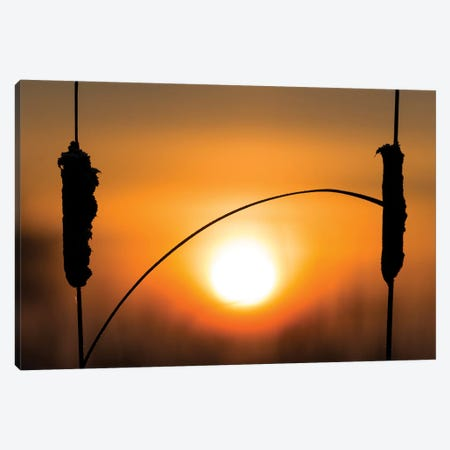 Reed Connected Canvas Print #MTS90} by Martin Steenhaut Canvas Art