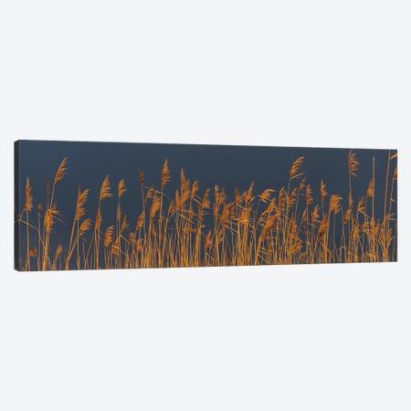 Reed Dark Sky Canvas Print #MTS91} by Martin Steenhaut Canvas Artwork