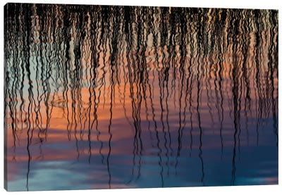 Reed Reflection Canvas Art Print
