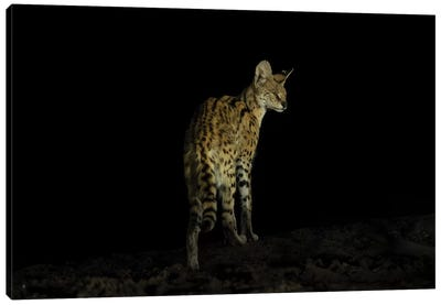 Serval Night Canvas Art Print