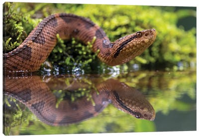 Snake Reflection Canvas Art Print