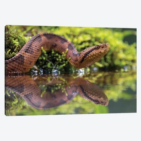 Snake Reflection Canvas Print #MTS96} by Martin Steenhaut Canvas Art Print