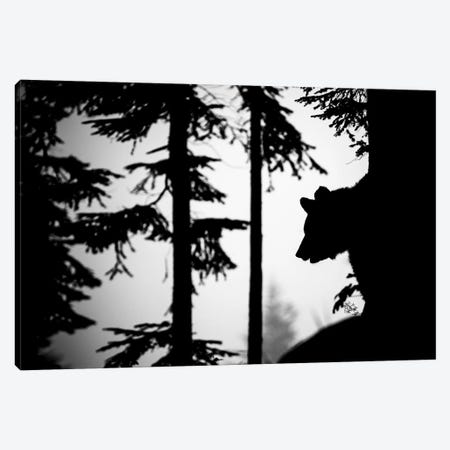 Bear Silhouette II Canvas Print #MTS9} by Martin Steenhaut Canvas Wall Art