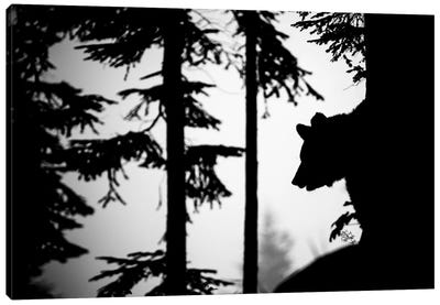 Bear Silhouette II Canvas Art Print