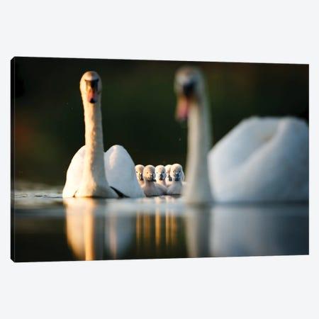 Swan Family Canvas Print #MTU107} by Mateusz Piesiak Canvas Artwork