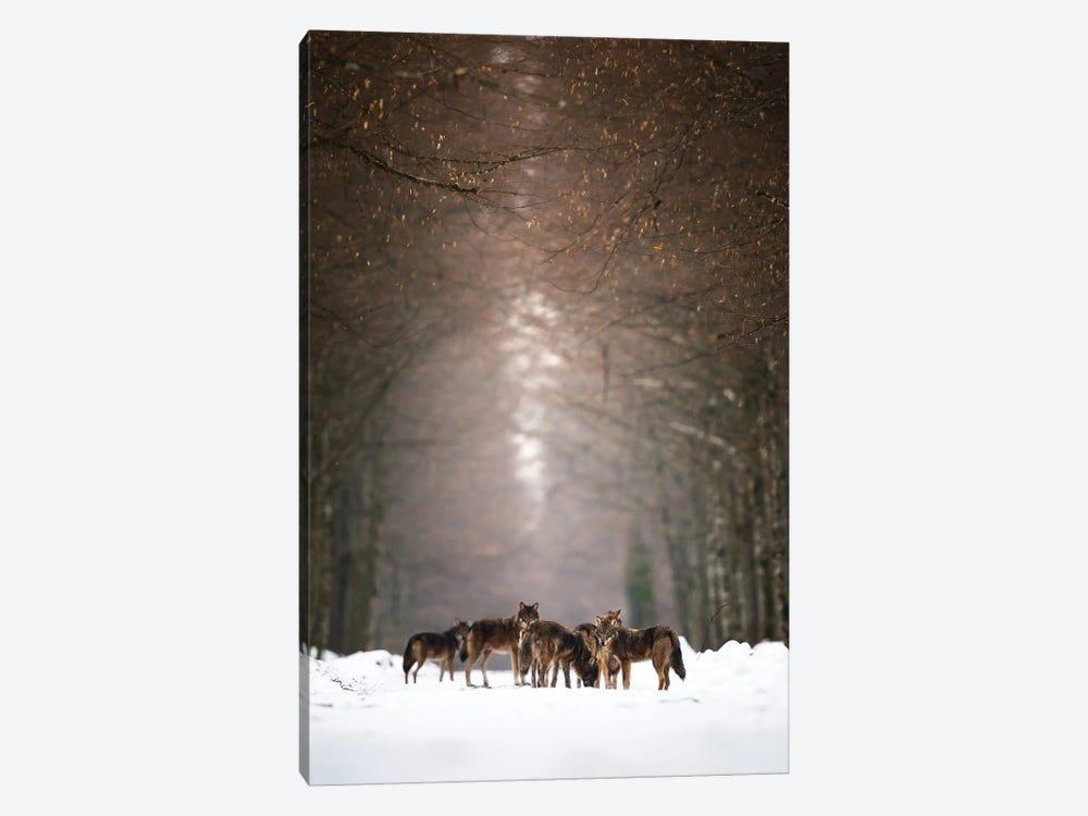 Wolves by Mateusz Piesiak 1-piece Canvas Art Print