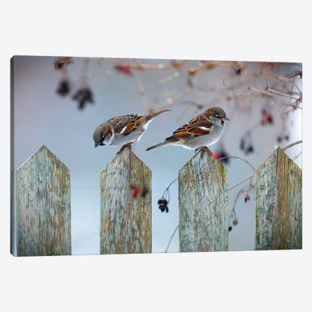 House Sparrows Canvas Print #MTU122} by Mateusz Piesiak Canvas Art Print
