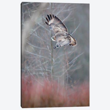 Flying Buzzard Canvas Print #MTU131} by Mateusz Piesiak Canvas Artwork