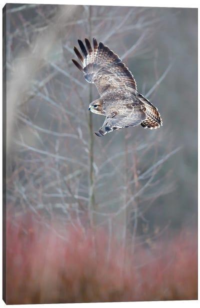 Flying Buzzard Canvas Art Print