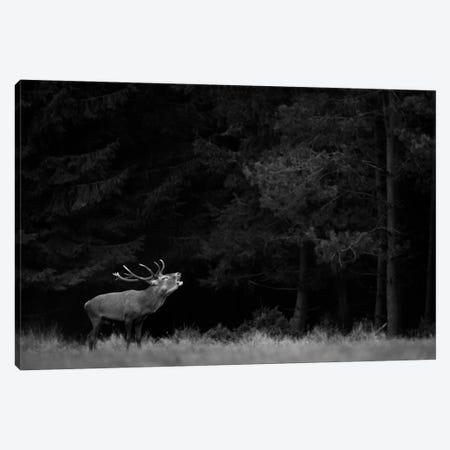 Red Deer B&W Canvas Print #MTU134} by Mateusz Piesiak Canvas Art Print