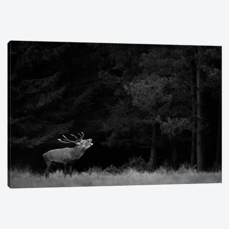 Red Deer B&W Canvas Print #MTU134} by Mateusz Piesiak Canvas Art Print