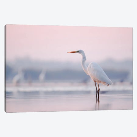 Pastel Egret Canvas Print #MTU139} by Mateusz Piesiak Canvas Wall Art
