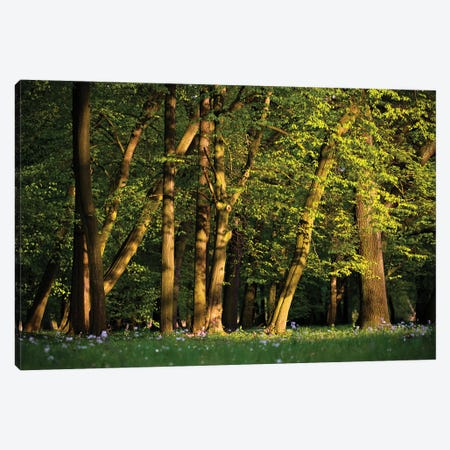 Spring Forest Canvas Print #MTU156} by Mateusz Piesiak Canvas Art Print