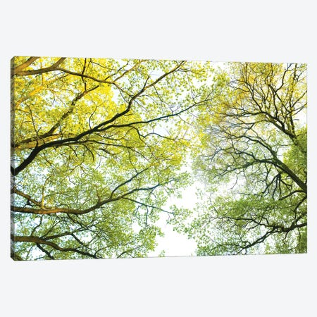 Spring Trees Canvas Print #MTU157} by Mateusz Piesiak Canvas Art Print