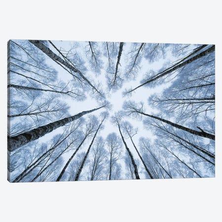 Winter Trees I Canvas Print #MTU168} by Mateusz Piesiak Art Print