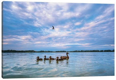 Mallard Ducks Canvas Art Print