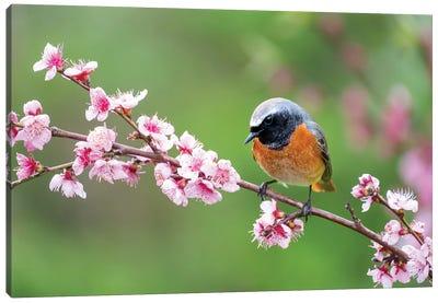 Spring Bird Canvas Art Print