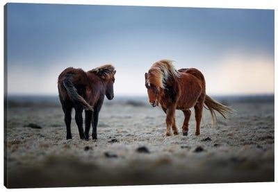 Icelandic Horses Canvas Art Print