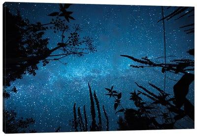 Night Magic Canvas Art Print