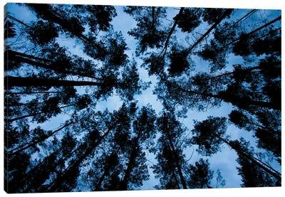 Night Forest Canvas Art Print
