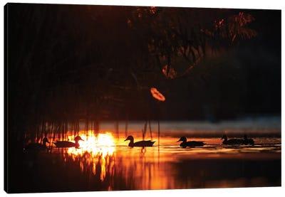 Ducks At Sunrise Canvas Art Print