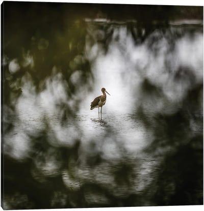 Black Stork Canvas Art Print
