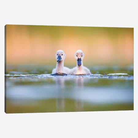 Brothers Canvas Print #MTU20} by Mateusz Piesiak Canvas Art Print