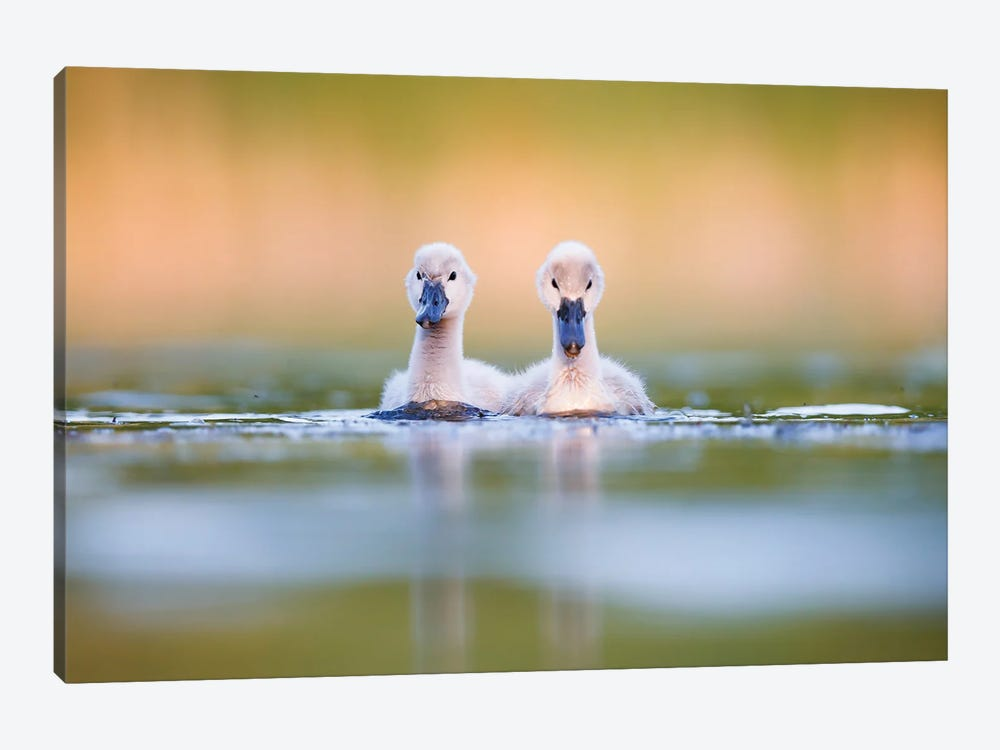 Brothers by Mateusz Piesiak 1-piece Canvas Wall Art