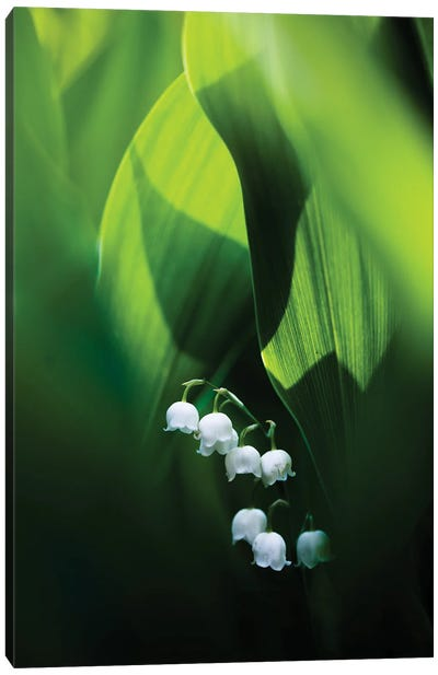 Lily Of The Valley Canvas Art Print
