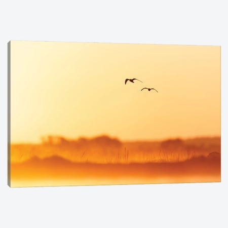 Golden Morning Canvas Print #MTU223} by Mateusz Piesiak Canvas Artwork